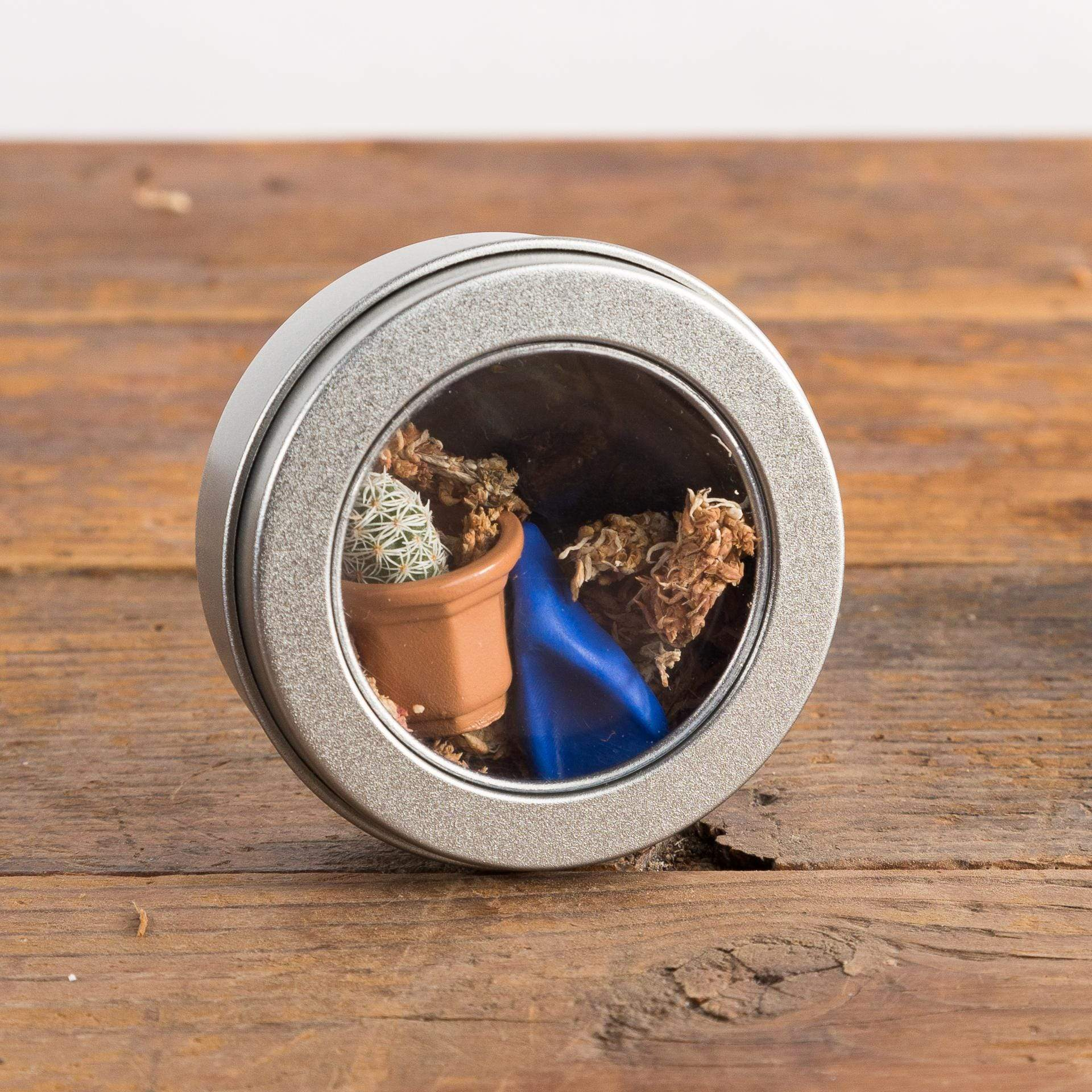 Thimble Cactus Planting Kit - Urban Sprouts