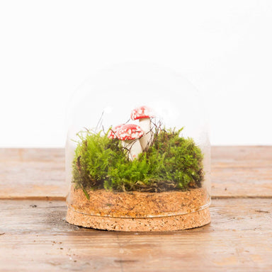 Mini Cork Bottom Cloche - Urban Sprouts