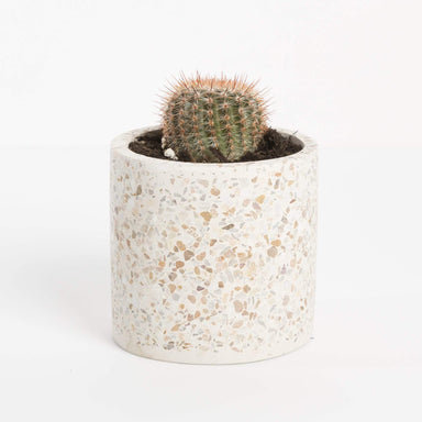 "Urban Sprouts Plant 2"" in nursery pot Cactus 'Ball'"