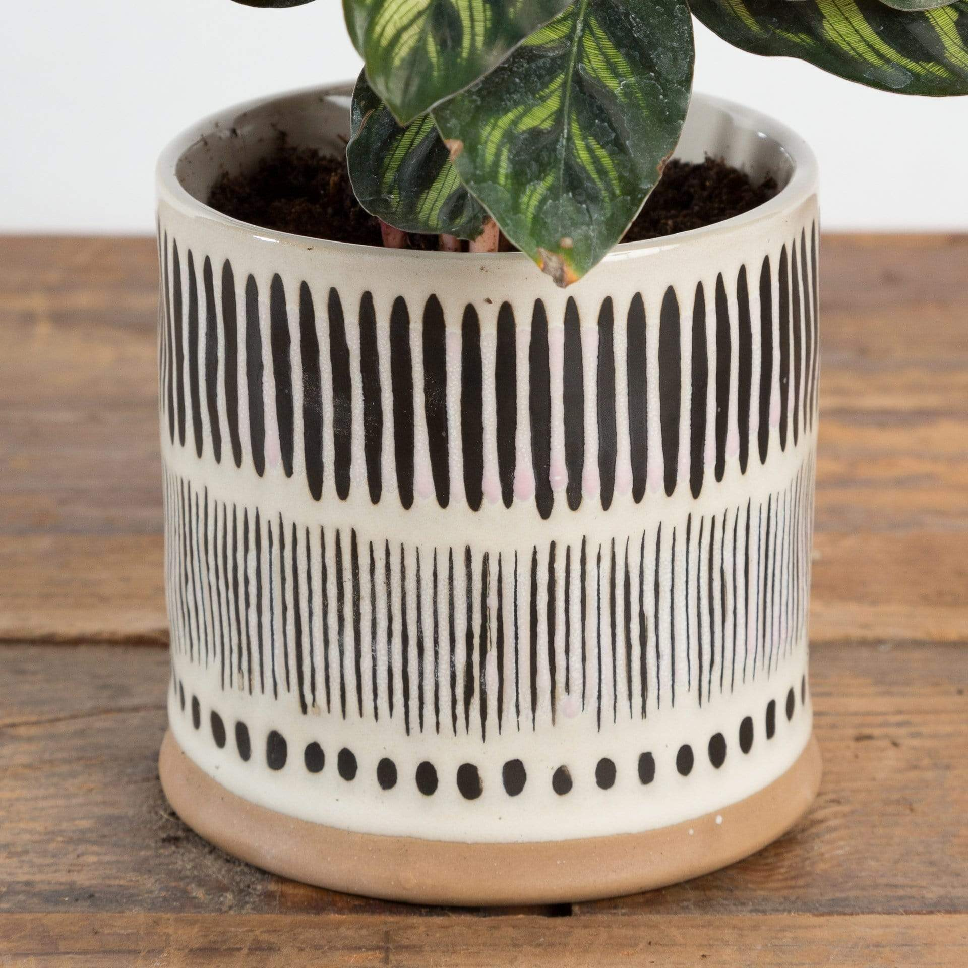 "Ink Lines Planter 4"" - Urban Sprouts"