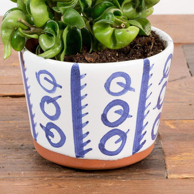 "Cutie Q Planter 4.5"" - Urban Sprouts"