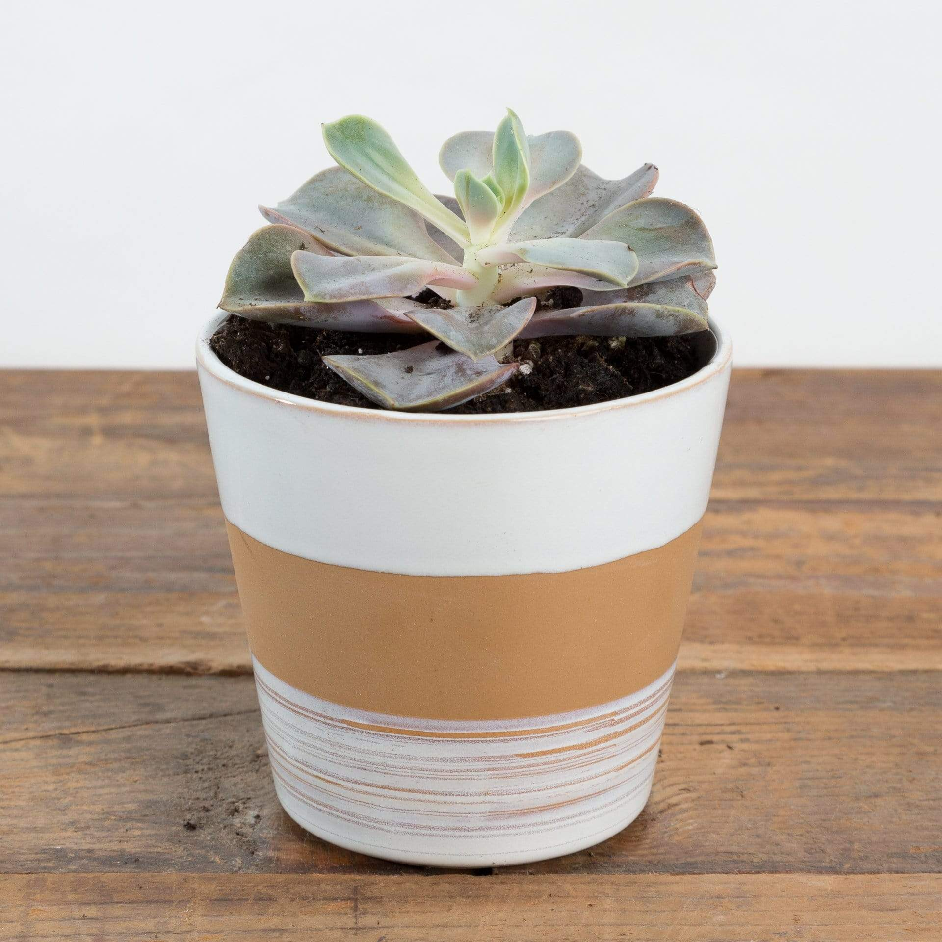 Candy Corn Planter - Urban Sprouts