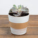 "Candy Corn Planter 4"" - Urban Sprouts"