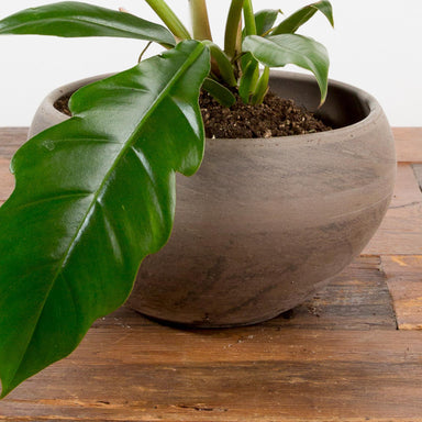 "Marbled Black Clay Bowl Planter 7.5"" - Urban Sprouts"