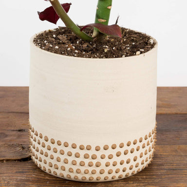 "Cream Studded Skirt Planter 5.5"" - Urban Sprouts"