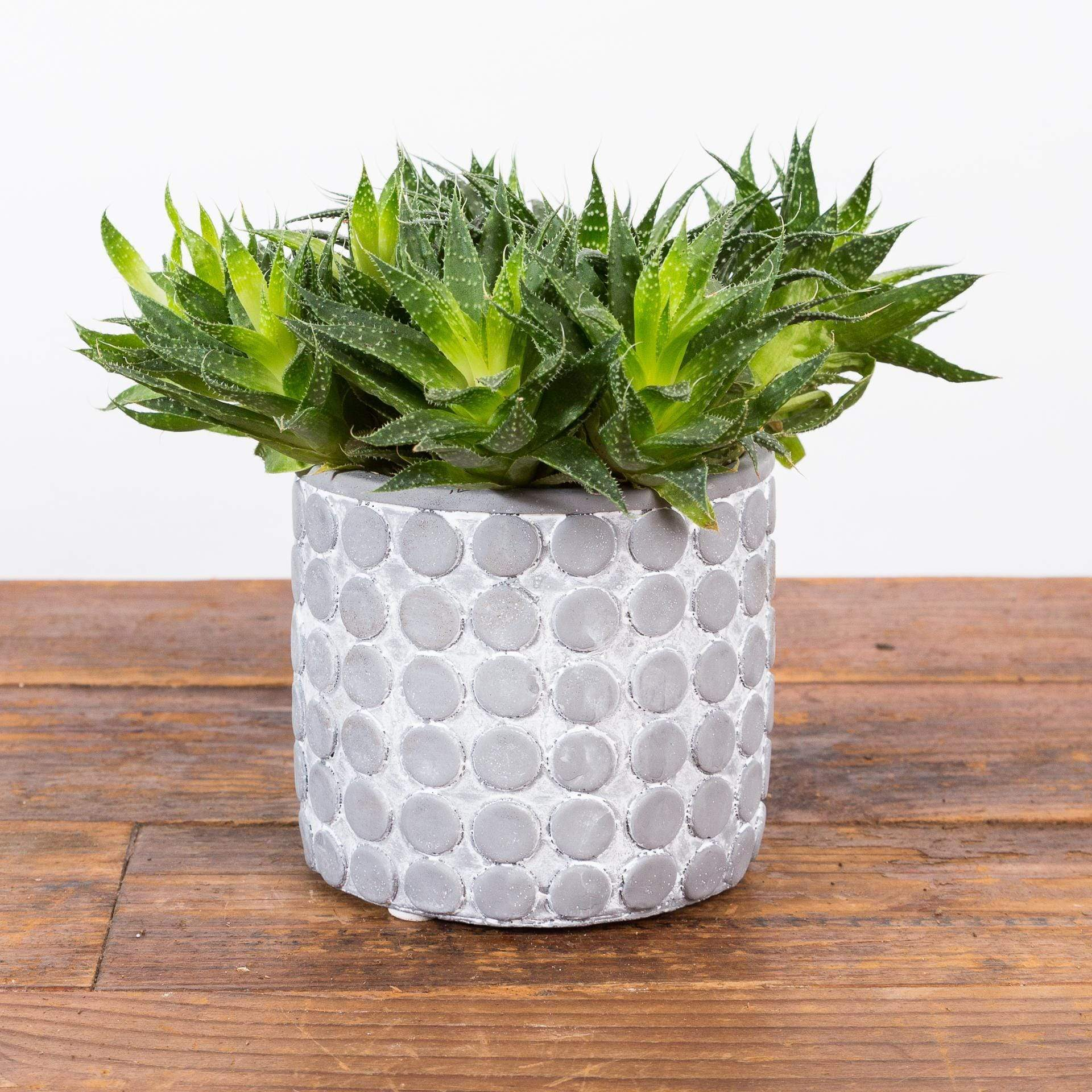 Dot Planter - Urban Sprouts