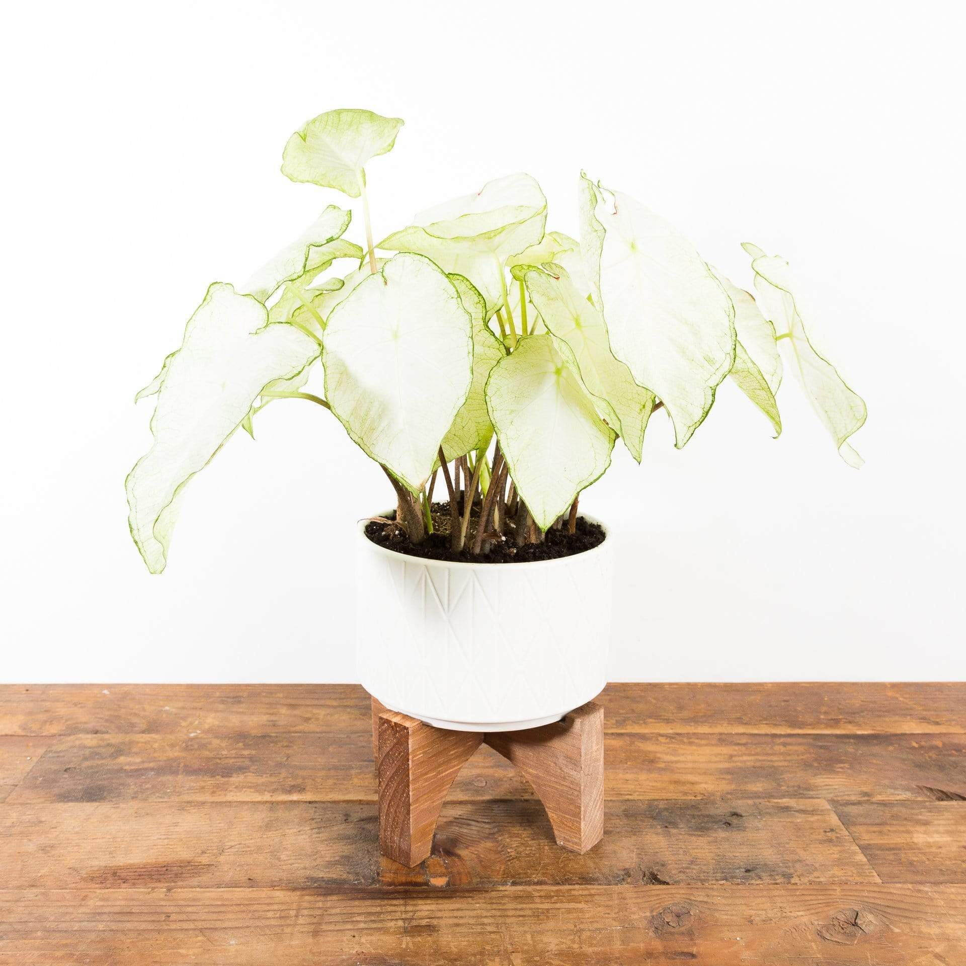 Engraved Diamond Planter - Urban Sprouts