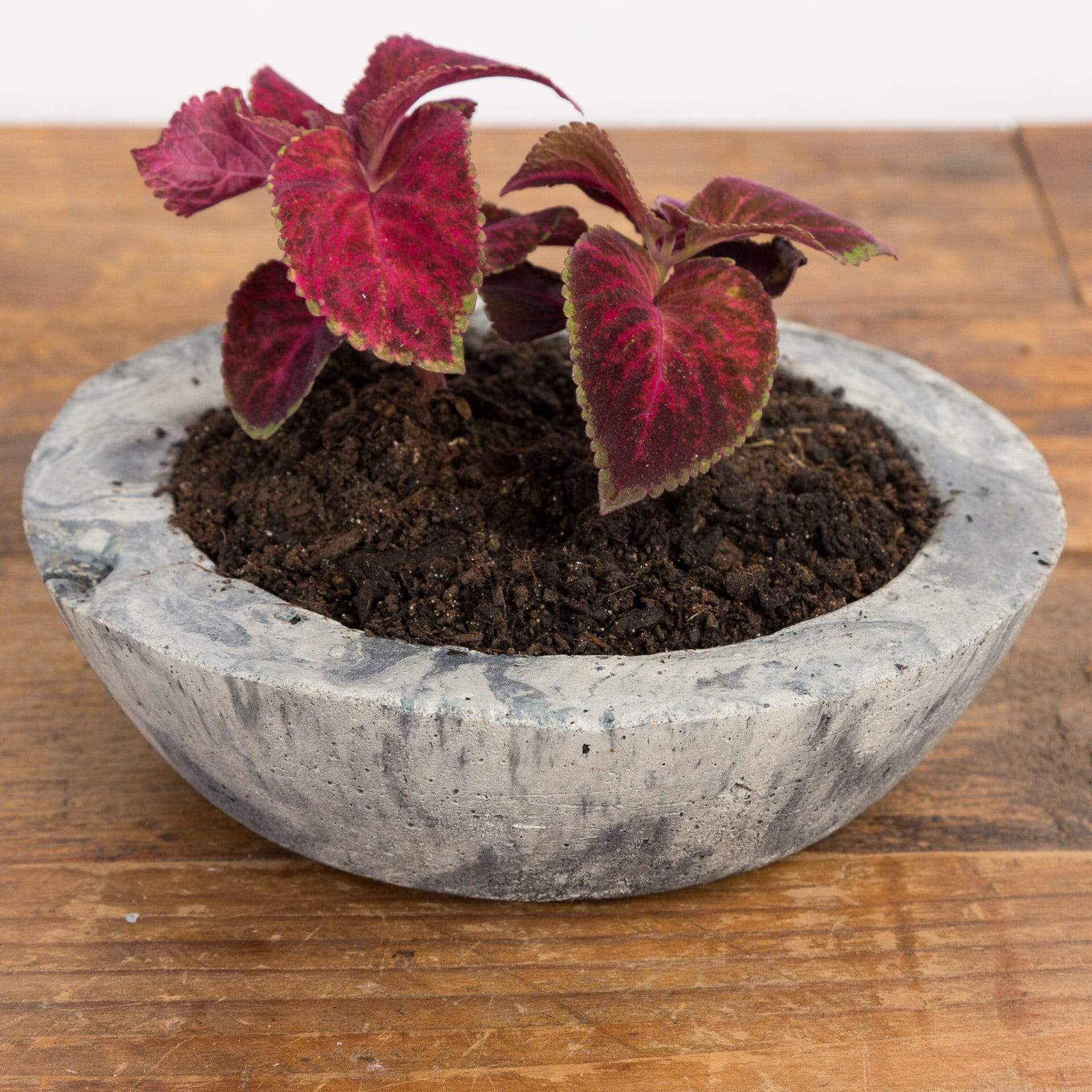 Cement Bowl Planter - Urban Sprouts