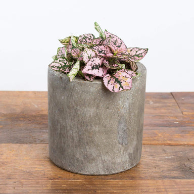 "Concrete Cylinder Planter 5"" - Urban Sprouts"