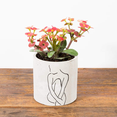 "Elouise Planter 3.5"" - Urban Sprouts"