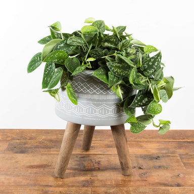 "Line Art Stilted Planter 10"" - Urban Sprouts"
