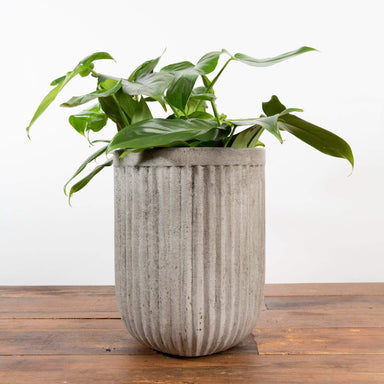 "Ribbed Concrete Cylinder Planter 5"" - Urban Sprouts"