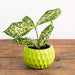 Pin Cushin Planter - Urban Sprouts