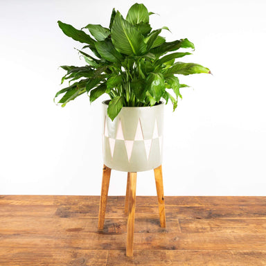 "Art Deco Triangle Stilted Planter 10"" - Urban Sprouts"