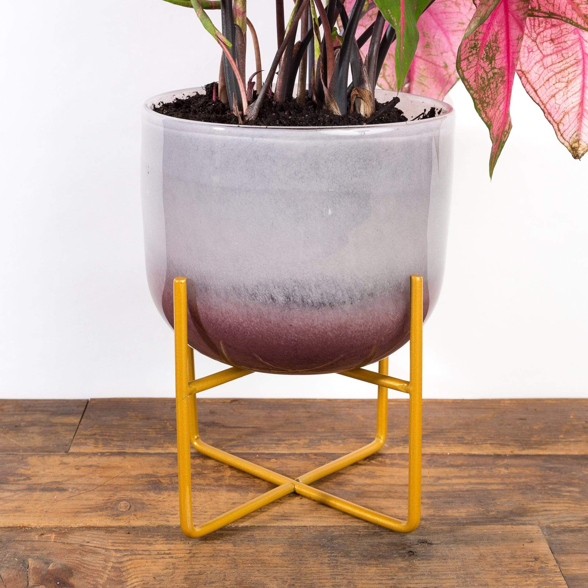 Blushing Glass Planter - Urban Sprouts