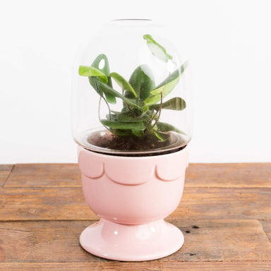 "Ice Cream Sundae Covered Planter 4"" - Urban Sprouts"