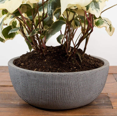 "Scale Bowl Planter 11"" - Urban Sprouts"