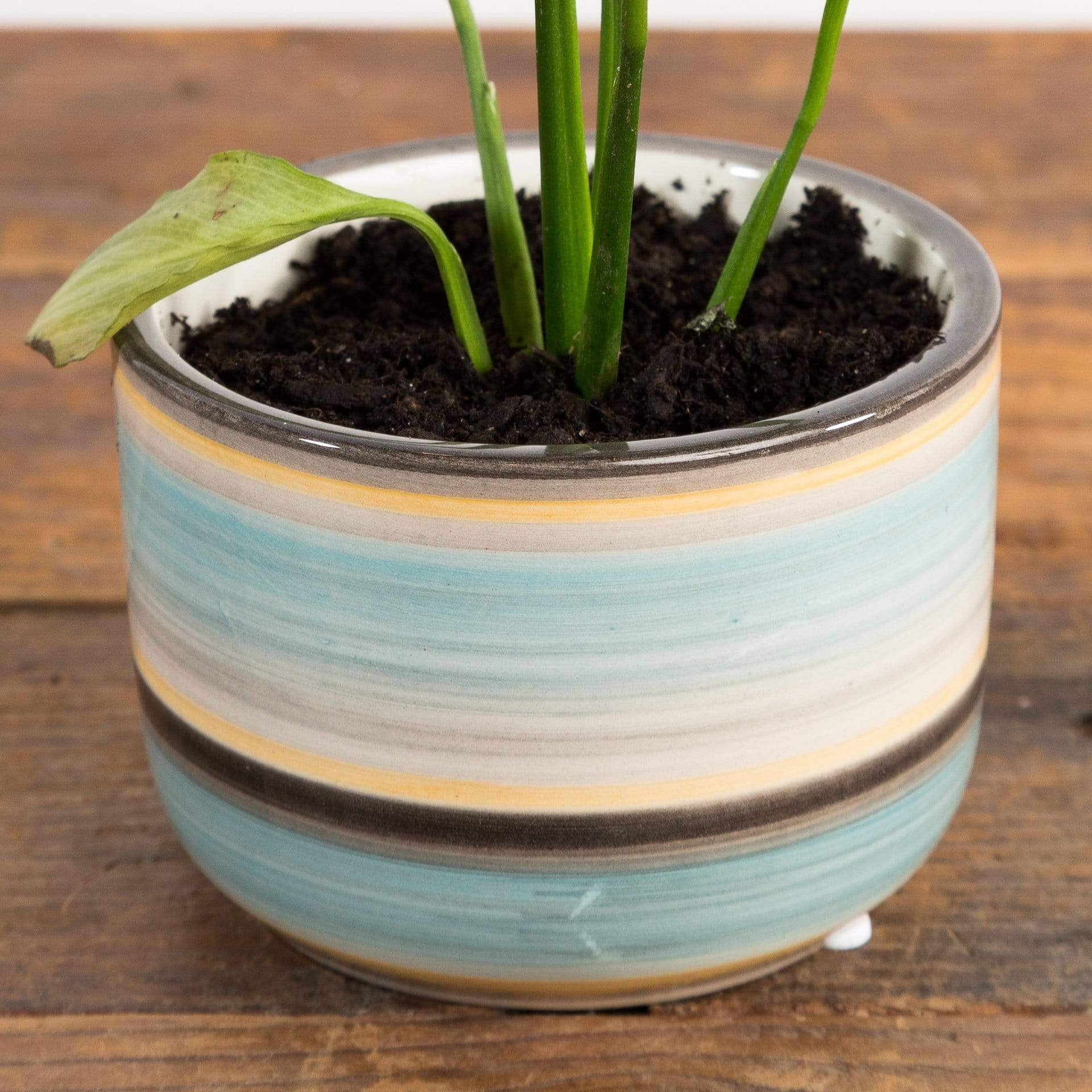 Glossy Mini Bell Planter - Urban Sprouts