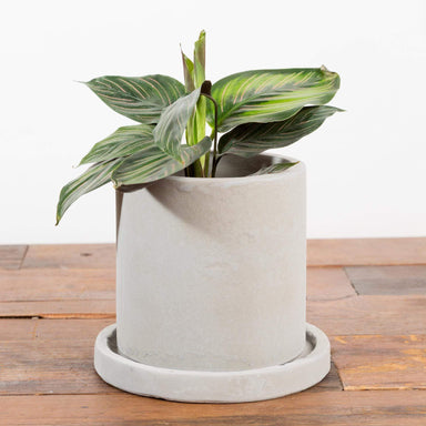 "Top Hat Planter 5"" - Urban Sprouts"