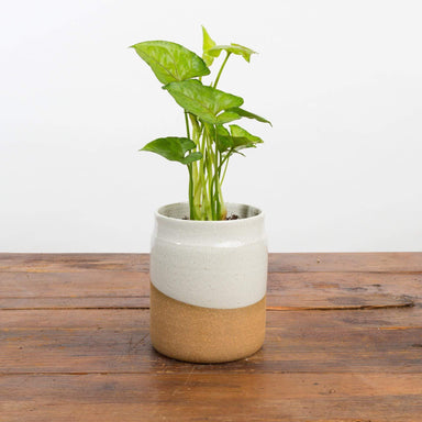 "Earth Horizon Planter 4.5"" - Urban Sprouts"