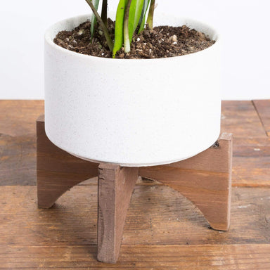 "Desert Planter 5.5"" - Urban Sprouts"