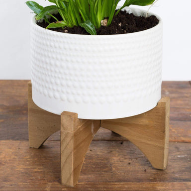 Dew Drop Planter - Urban Sprouts