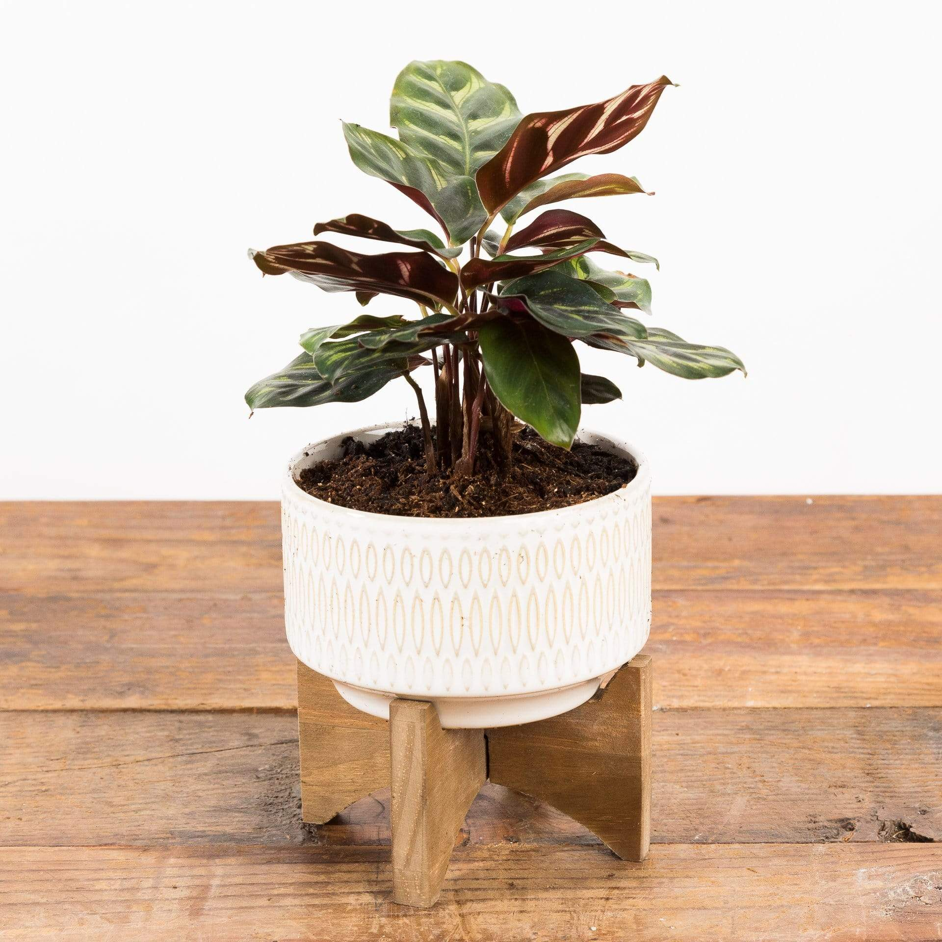 Dot Dash Planter - Urban Sprouts