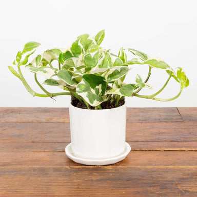 Geometric Column Planter - Urban Sprouts