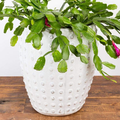 "Lean Polka Dot Planter 12"" - Urban Sprouts"