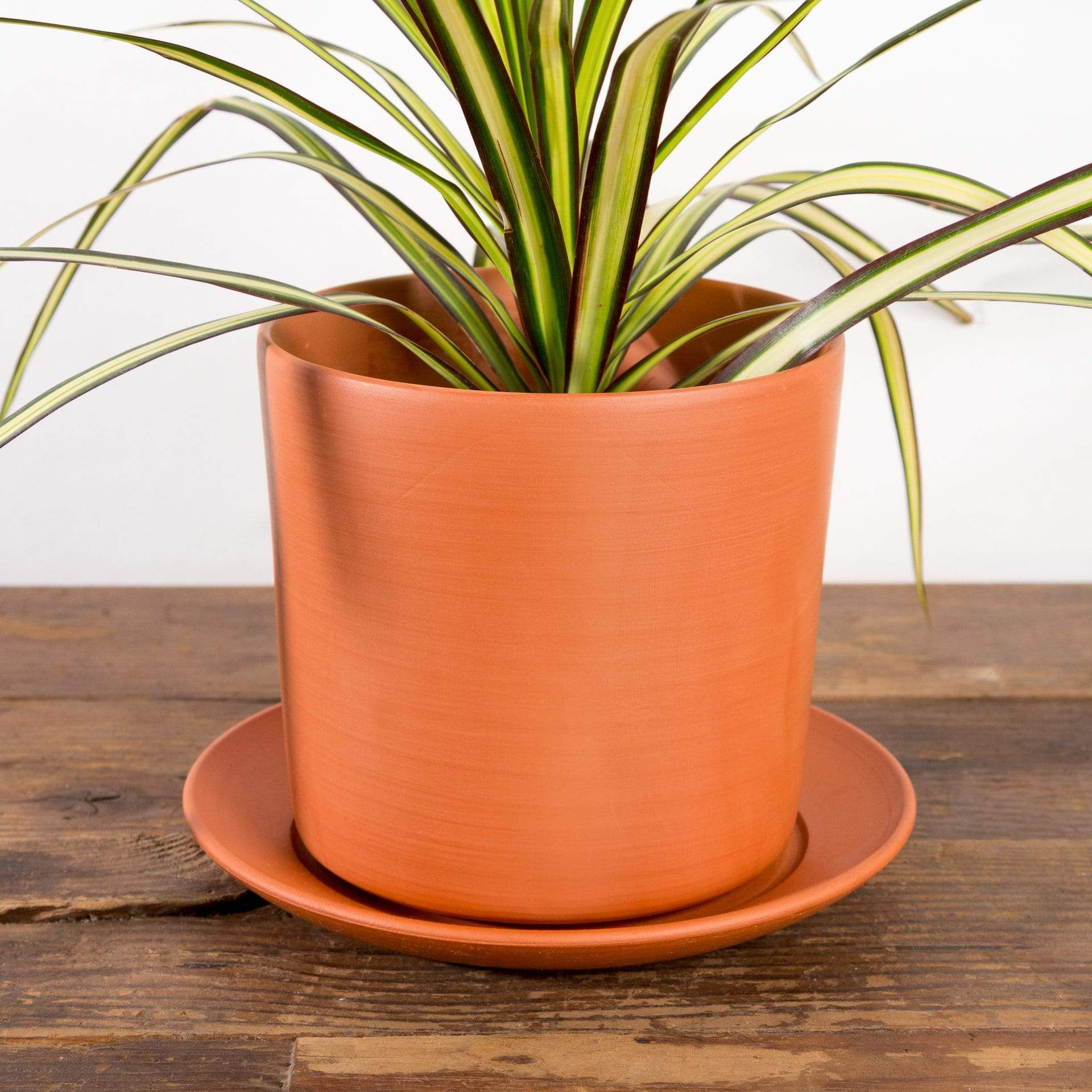 Clay Cylinder Planter - Urban Sprouts