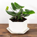 Hexagon Planter - Urban Sprouts