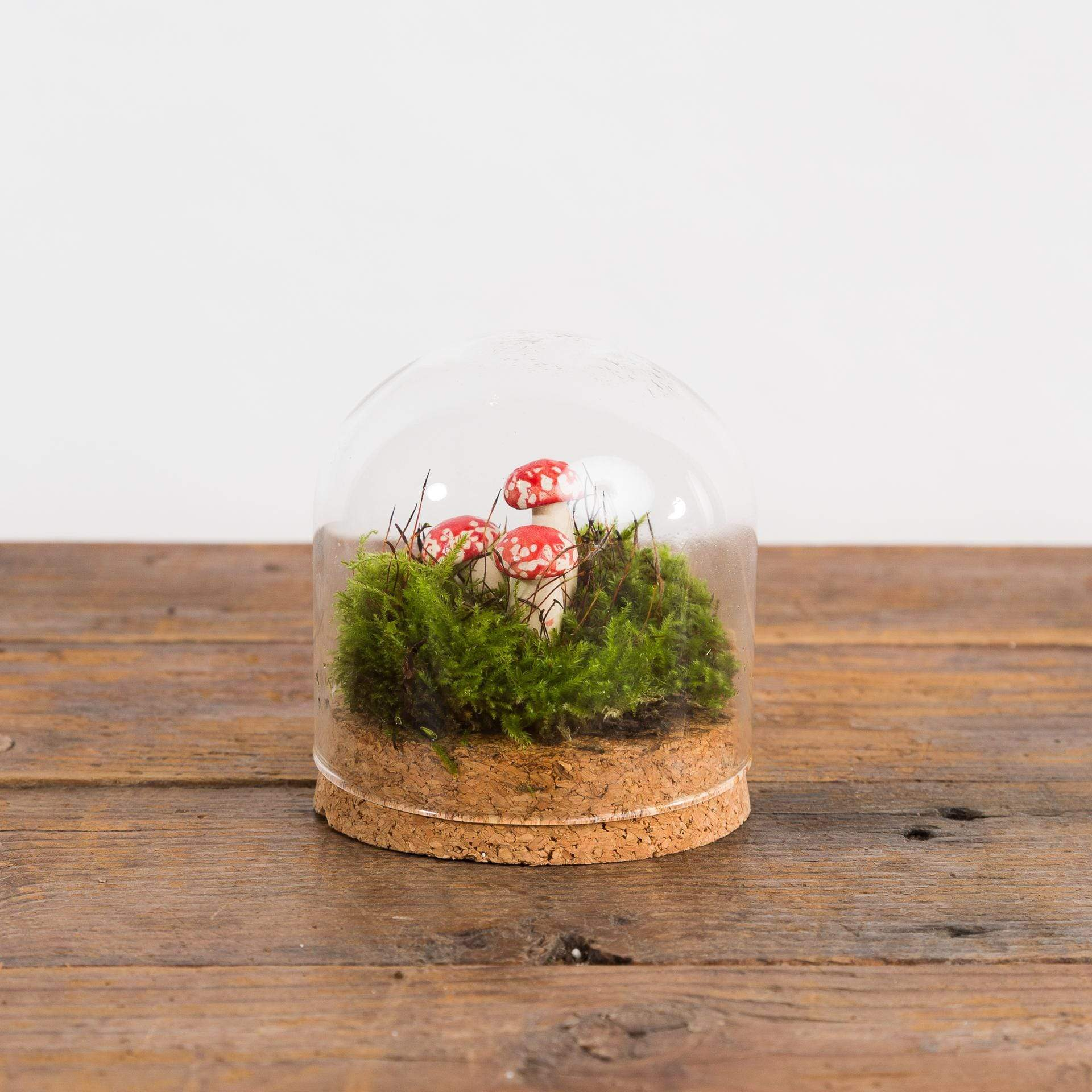 Mini Muschroom Living Moss Terrarium - Urban Sprouts