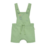 Hawkbill Turtle Shortall