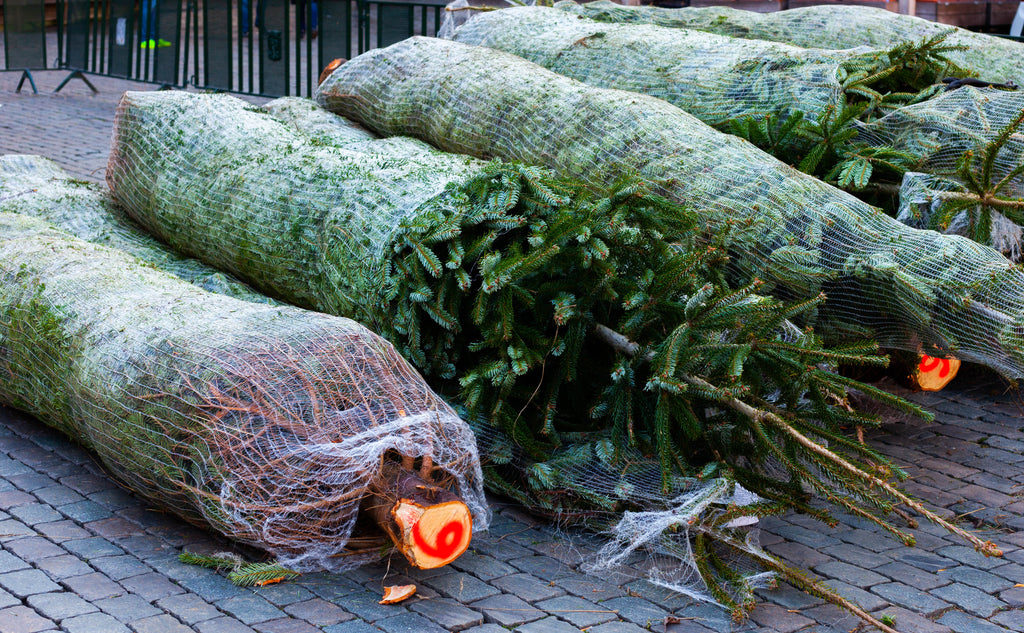 Open for Business 2019 - We tell you what Christmas Trees you Need to Buy!