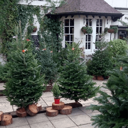 PICK YOUR OWN CHRISTMAS TREE