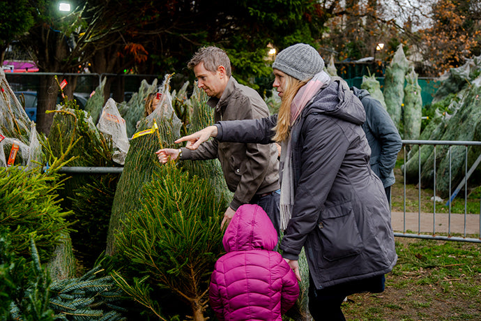 Free Christmas Trees for Schools