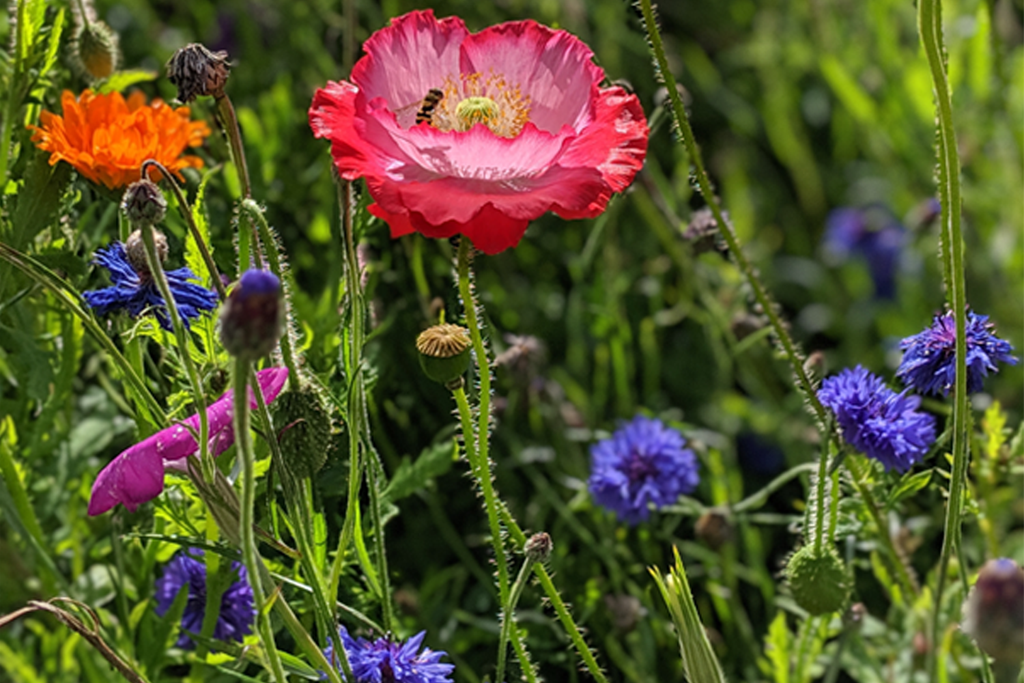 A Summer Meadow Arrangement, Thursday 18th June 2020