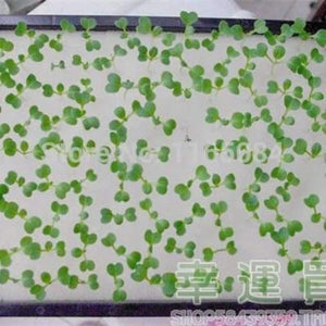 Garden supplies hydroponic seeds vegetables foam cubes pot for starting seed for hydroponics system2.3*2.3 (117PCS/lot).