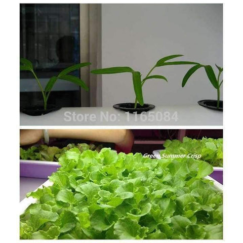 Planet Gates Garden supplies hydroponic seeds vegetables foam cubes pot for starting seed for hydroponics system2.3*2.3 (117PCS/lot).