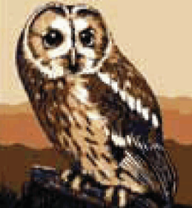 Brown Owl Tapestry kit