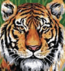 Tiger Tapestry kit