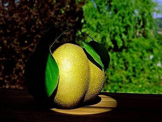 "Daniel Furon Collection ""Japanese Pear"" w/coa - Global Images Gallery"