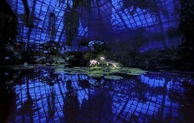 "Daniel Furon Collection ""Lotus In Blue Greenhouse"" w/coa - Global Images Gallery"