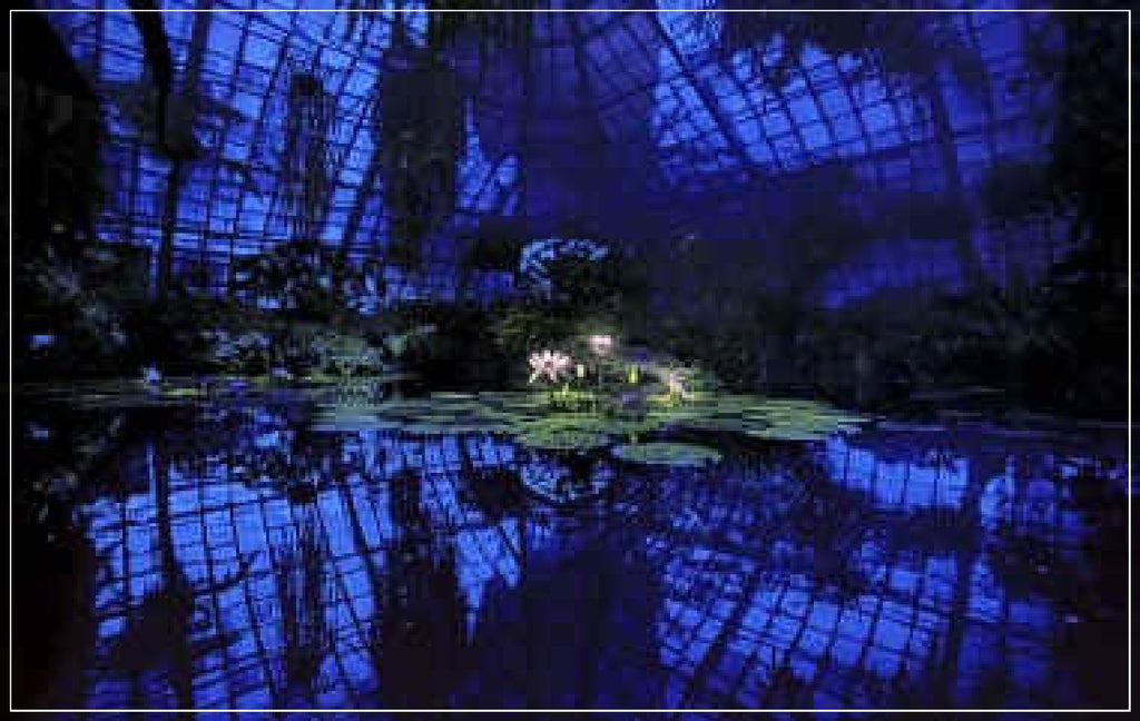 """Lotus In Blue Greenhouse"" by Daniel Furon"