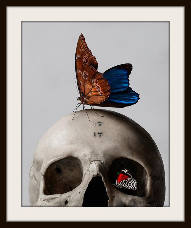 """Skull and Butterfly"" Fine Art Print by Mario Kroes-Fine Art Print-Global Images Gallery-16x20-Global Images"