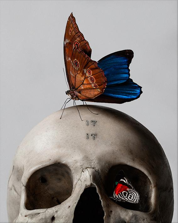 Skull and Butterfly by Mario Kroes