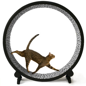 One Fast Cat Wheel