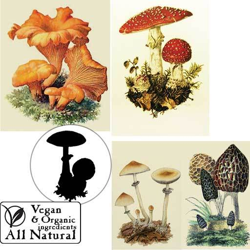 A collection of Sea Witch Botanicals' Fungi Friends organic, vegan body soap. Chanterelle, Amanita Muscaria, Psilocybe Cyanecens, and Morels.