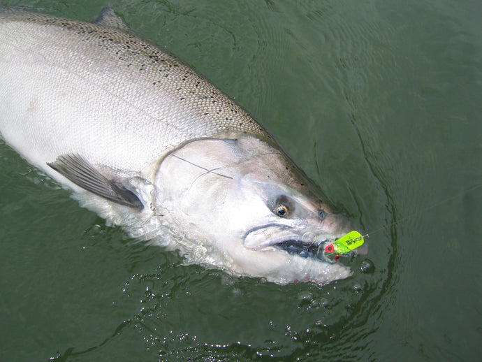 Spring Chinook Tips by JD Richey