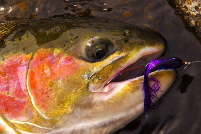 Warm Springs Steelhead - Don Roberts